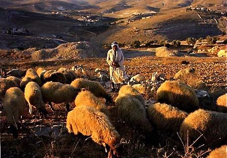 Image result for shepherds fields bethlehem