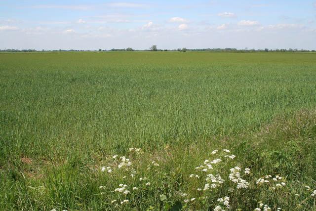 File:Farmland at Etton - geograph.org.uk - 442768.jpg
