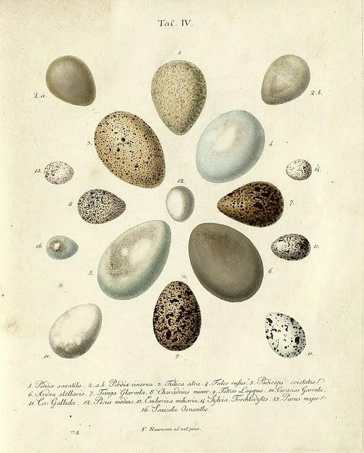 Die Eier der Vögel Deutschlands e, 1818