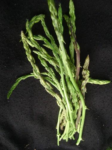 Wild Asparagus by Ayala Moriel