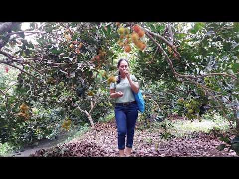 Vườn trái cây ở cần thơ các địa điểm yêu thích nhất