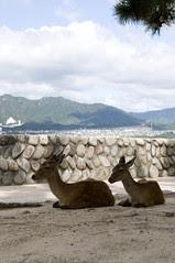 Miyajima, HIroshima
