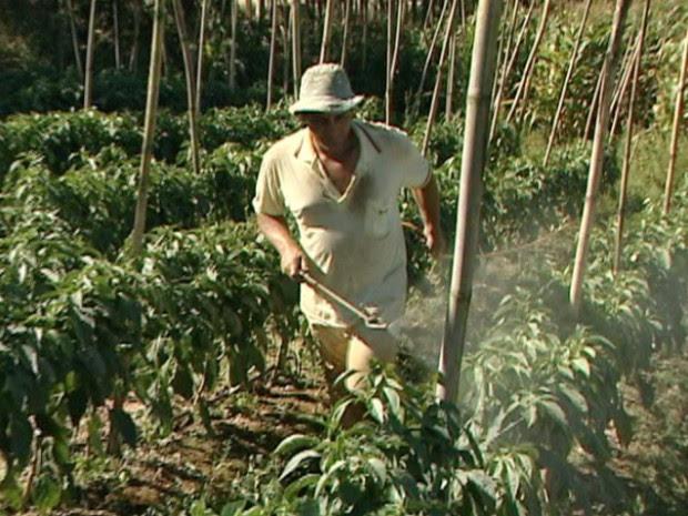 Agricultor usa agrotóxico na lavoura sem proteção, no Espírito Santo (Foto: Reprodução/TV Gazeta)