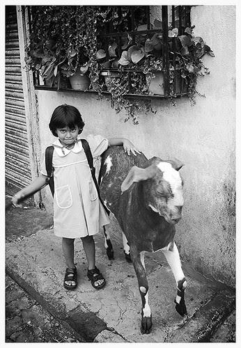 Going  To School ,,,, by firoze shakir photographerno1