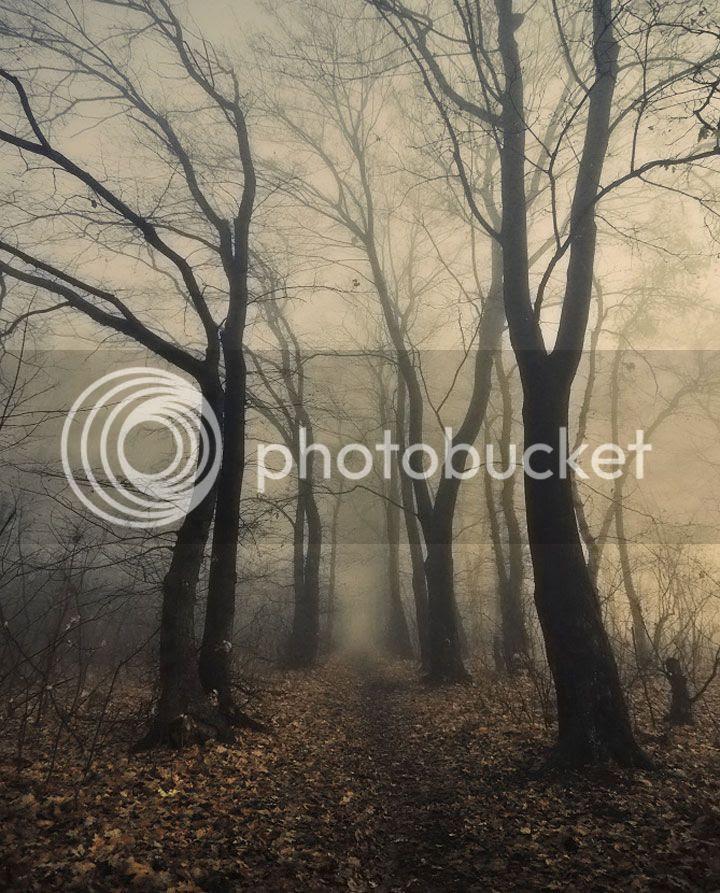 photo Dmitry-Bogachuk-2_zpsf2a9292e.jpg