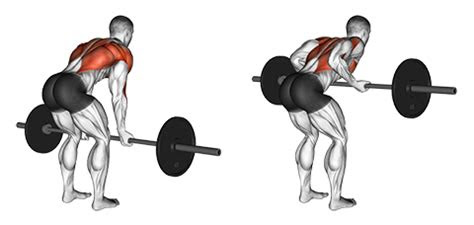 exercise   barbell underhand bent