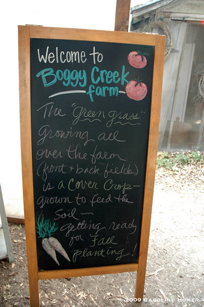 Welcome to Boggy Creek Farm
