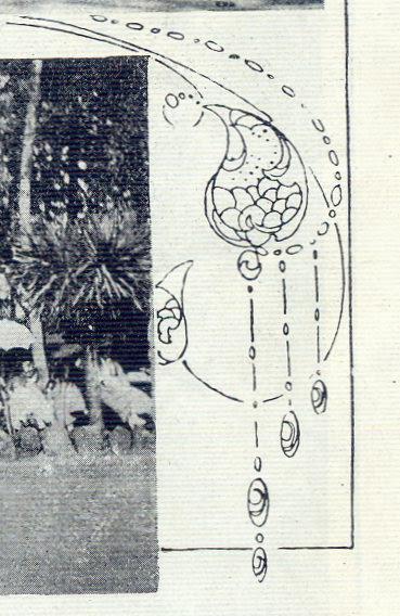 Ilustração Portugueza, No. 555, October 9 1916 - 19a