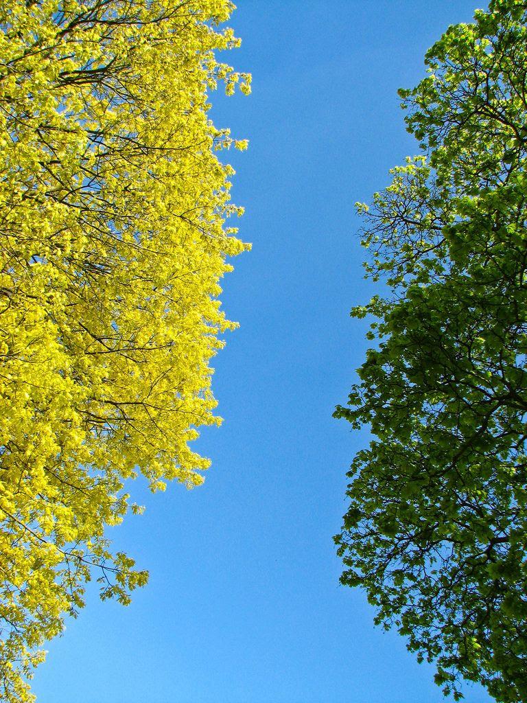trees,spring,sky