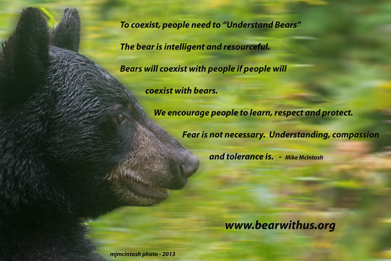 Understanding Bears Bear With Us