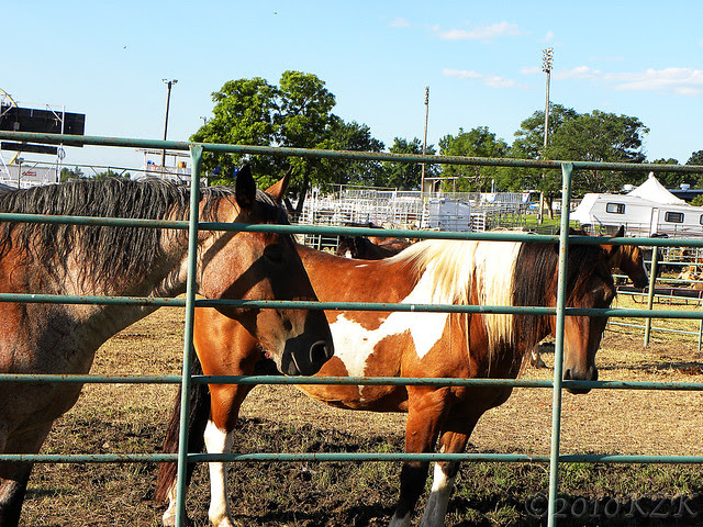 DSCN6104 Horses