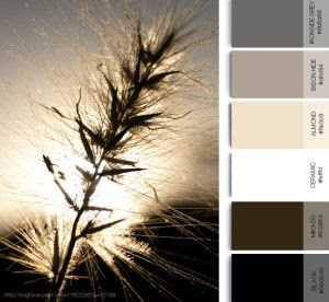 Moody grain color palette and inspiration