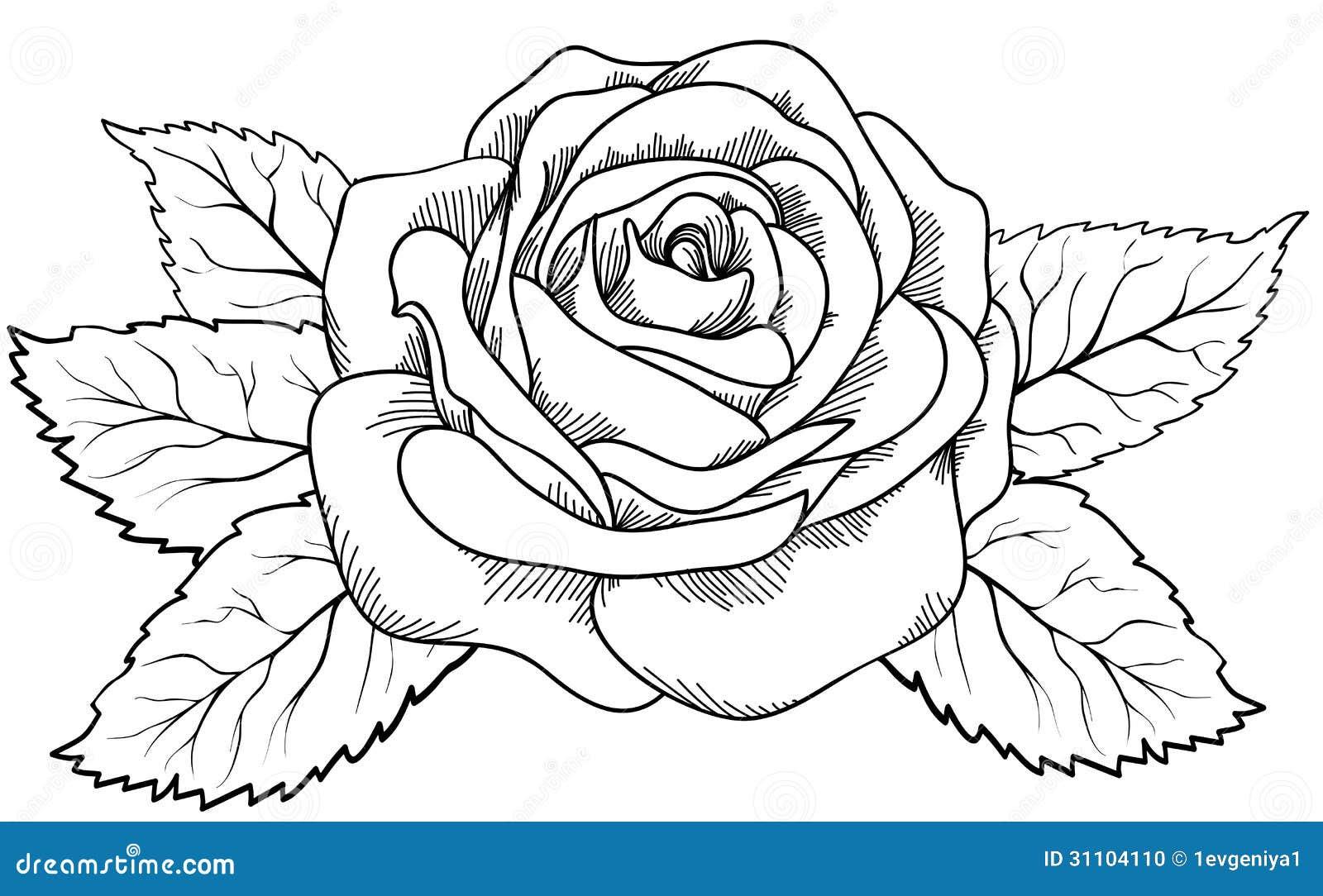 Knumathise Realistic Black And White Rose Drawing Images