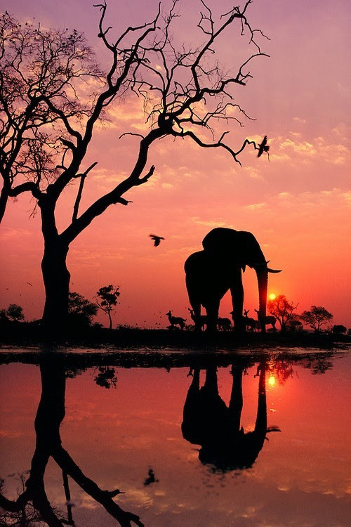 wonderous-world:  African Elephant at Dawn by Frans Lanting  ESCAPE DO YOU EVER FEEL LIKE ESCAPING FROM YOUR BORING LIFE? READY TO EXPLORE NEW PLACES AND WIDE OPEN SPACES. I DO EVERYDAY.