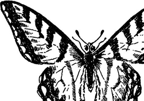 Vintage Butterfly Image   Nice!   The Graphics Fairy