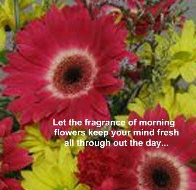 A Superb Morning  Free Good Morning eCards, Greeting