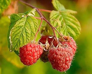 Raspberries (Rubus Idaeus).