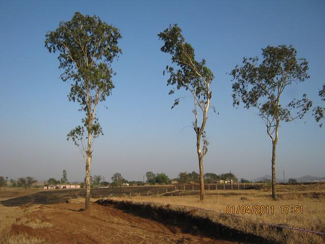 Jambhulwadi from Dajikaka Gadgil Developers' AnantSrishti Kanhe - Gated community of N A Bungalow Plots, Row Houses & 1 BHK 2 BHK 2.5 BHK Flats