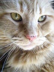 Jasper in the sun