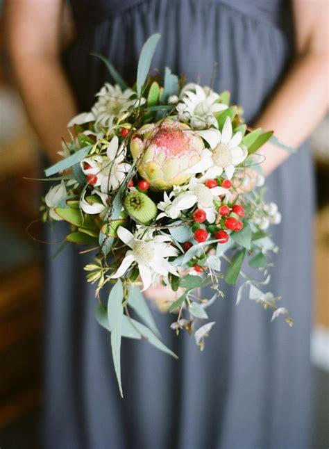38 best Flannel Flower images on Pinterest