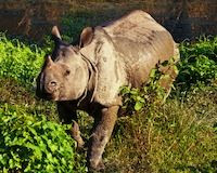 Protect Endangered Rhinos from Poacher Gangs