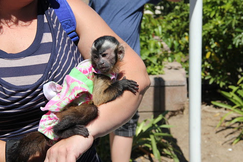 We saw a pet monkey!