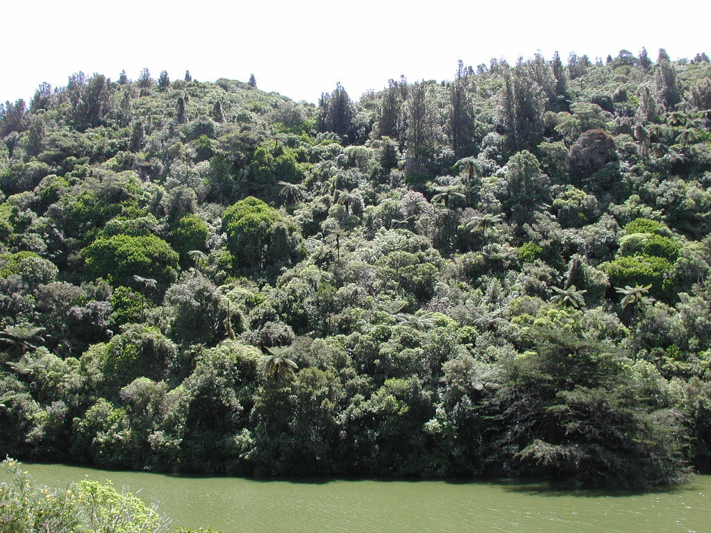 http://upload.wikimedia.org/wikipedia/commons/4/4e/Native_bush_along_lower_lake_in_Karori_Wildlife_Sanctuary.jpg