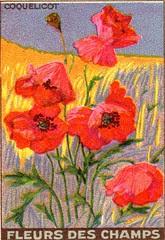 fleurs des champs 1
