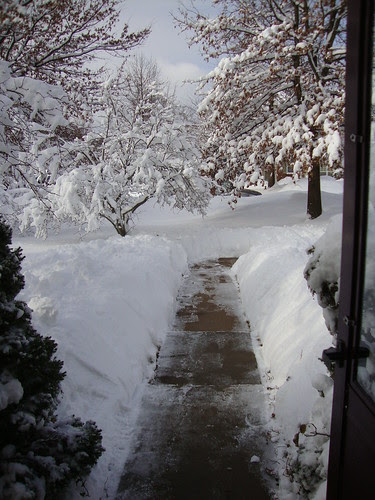 the view from my front door 1/27/11