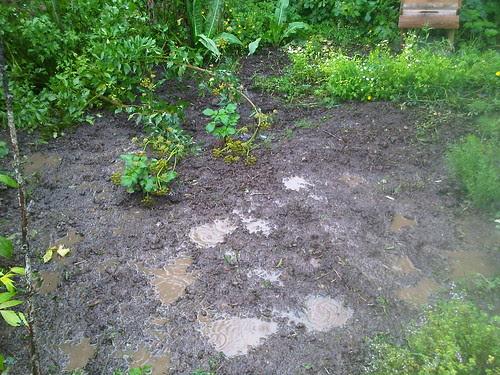 mud on allotment Jul 12 1