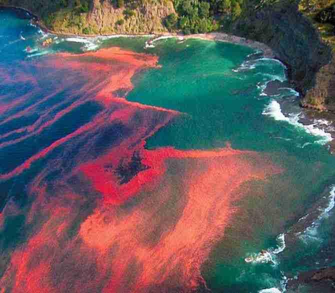 Η Κόκκινη παλίρροια (Red Tide)