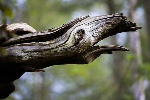 screetch of nature