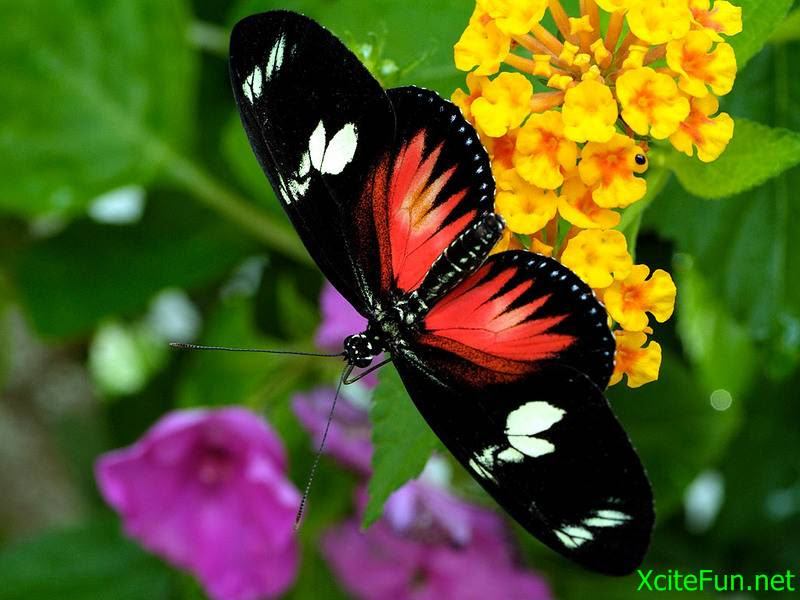 Beautiful Butterfly - XciteFun.net