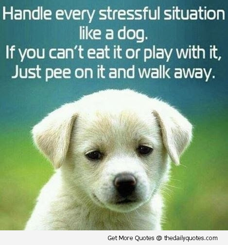 Good Funny Dog Puppy Cute Life Quotes Sayings Picture Images Her