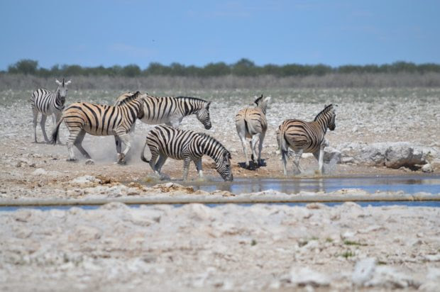 Top Destinations For Safari In Africa