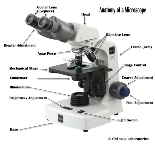what are the parts of microscope & their functions?