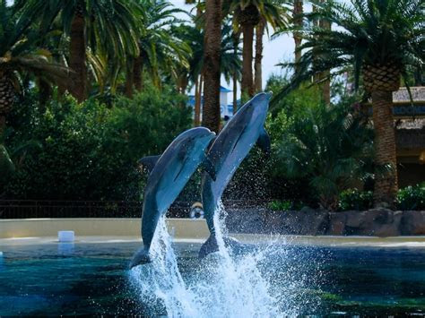 dolphin wallpapers pictures images