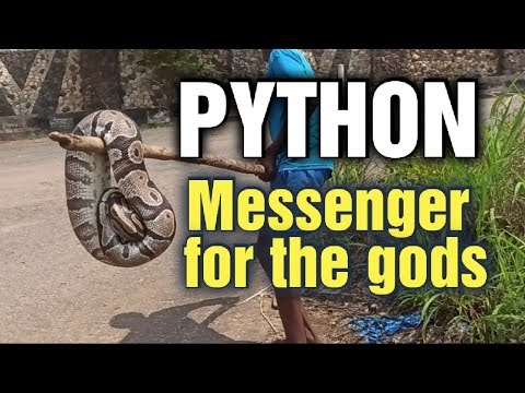 The truth about Python in Igboland.