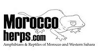 www.moroccoherps.com