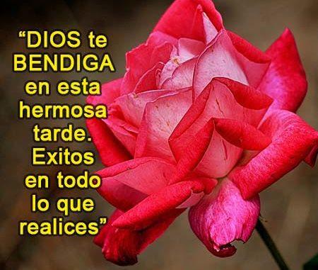 Imagenes De Rosas Con Frases De Buenas Tardes Rosas De Amor