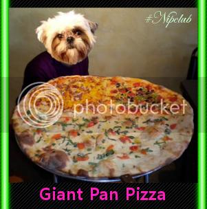 pizza dog mattie
