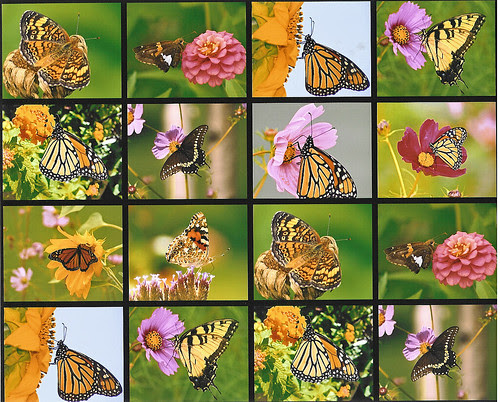 Butterfly Collage_edited-1
