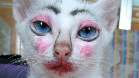 gambar gambar kucing lucu  bisa bikin tertawa