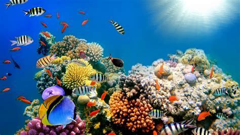 Sea Animal Wallpaper   Free Photos Download For Android