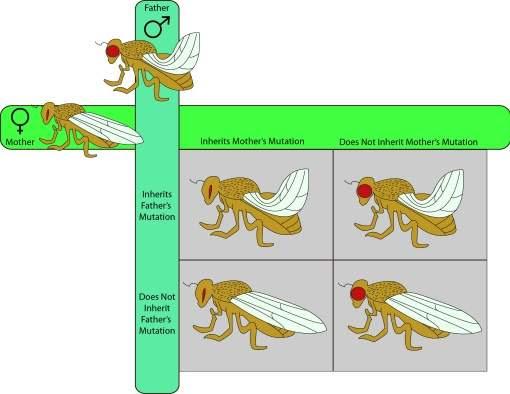 Estudo clássico da teoria da evolução está errado