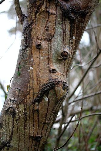 Tree Face (365/16)
