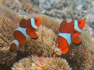 http://www.naturelicious.com/wp-content/uploads/2012/07/Zamami-fish.jpg