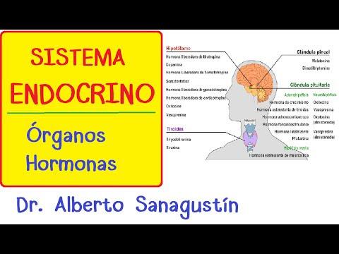 hormonas endocrinas exocrinas y mixtas