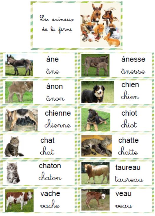 Na wsi - słownictwo 2 - Francuski przy kawie