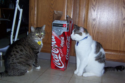 Cat Cola